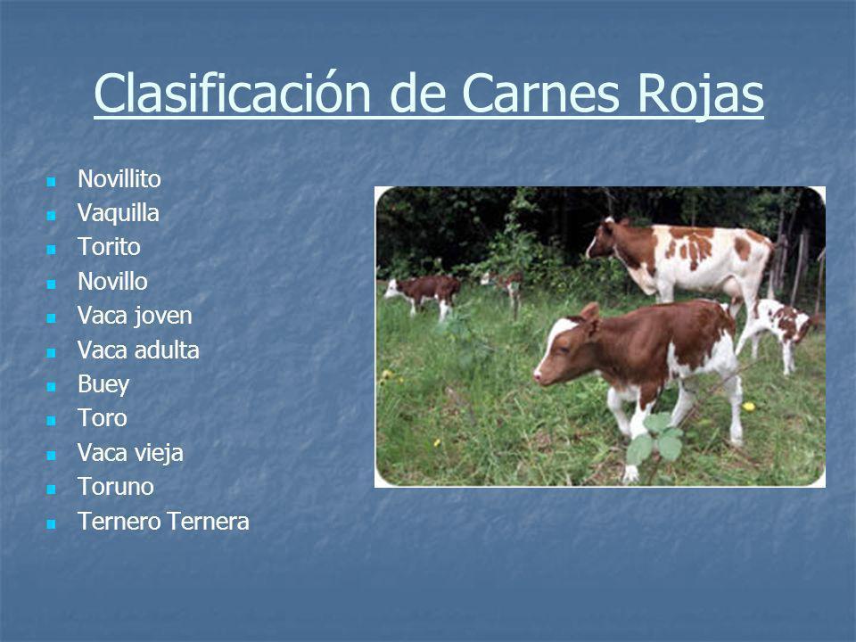 Tipificación Es la calificación de las canales bovinas en base a: Es la calificación de las canales bovinas en base a: Edad Edad Sexo Sexo Cobertura de Grasa Cobertura de Grasa