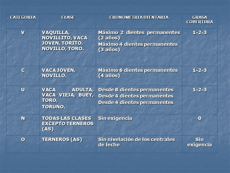 CATEGORIA CLASE CRONOMETRIA DIENTARIA GRASA COBERTURA V VAQUILLA, NOVILLITO, VACA JOVEN, TORITO, NOVILLO, TORO. Máximo 2 dientes permanentes (2 años)