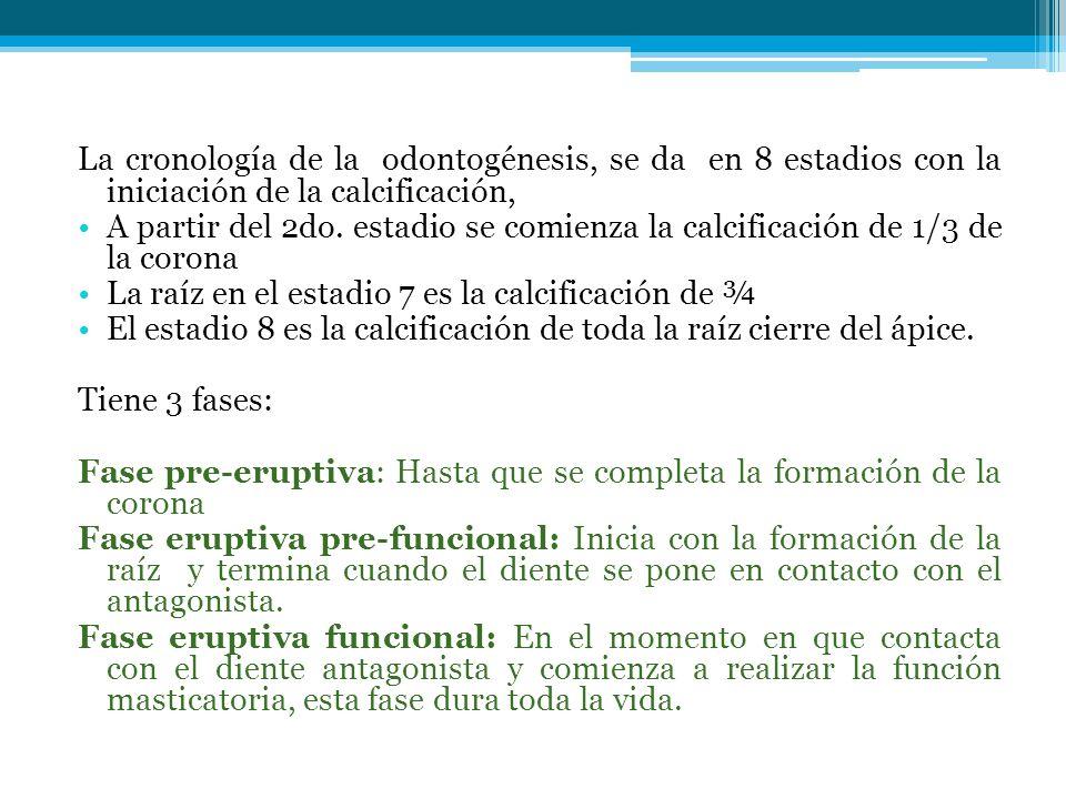 La cronología de la odontogénesis, se da en 8 estadios con la iniciación de la calcificación, A partir del 2do. estadio se comienza la calcificación d