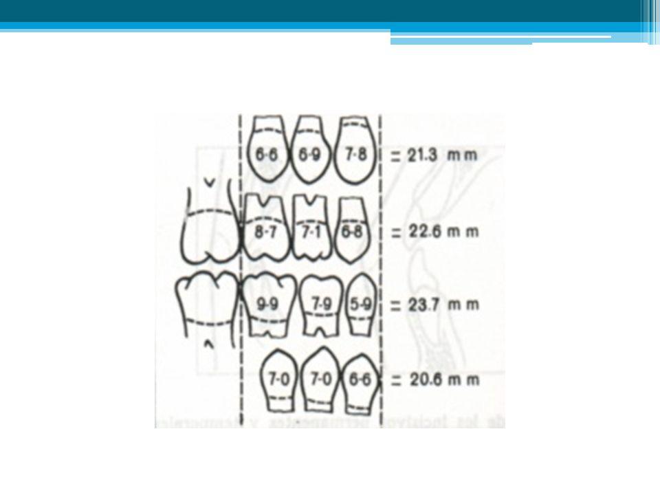 La longitud del arco dentario, desde la superficie distal del segundo molar temporal de un lado a la correspondiente del lado opuesto, no aumenta con la edad sino que disminuye, ya que el ancho mesiodistal combinado de canino, primero y segundo molares temporales es mayor que el de canino, primera y segunda premolares, tal como lo han demostrado Nance y otros investigadores.