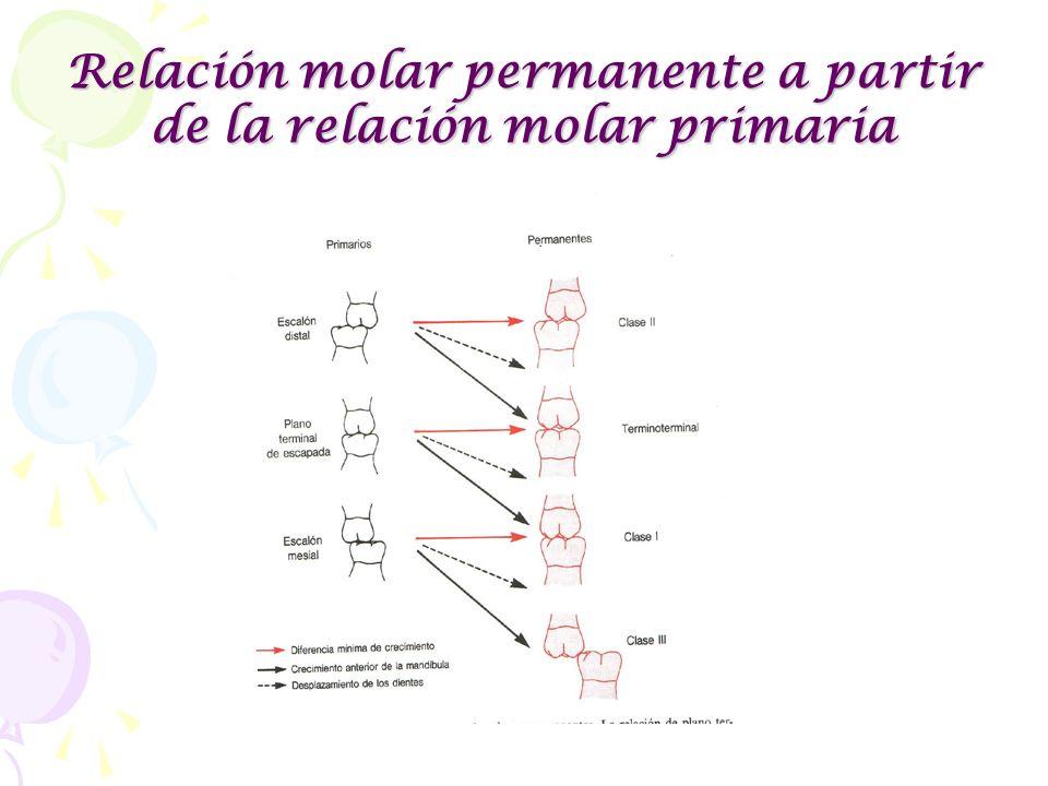 Relación molar permanente a partir de la relación molar primaria