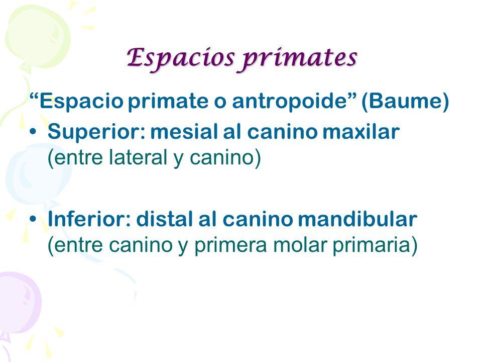Espacios primates Espacio primate o antropoide (Baume) Superior: mesial al canino maxilar (entre lateral y canino) Inferior: distal al canino mandibul