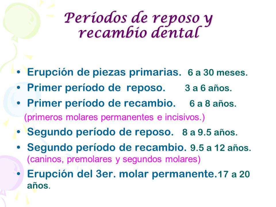 Períodos de reposo y recambio dental Erupción de piezas primarias. 6 a 30 meses. Primer período de reposo. 3 a 6 años. Primer período de recambio. 6 a