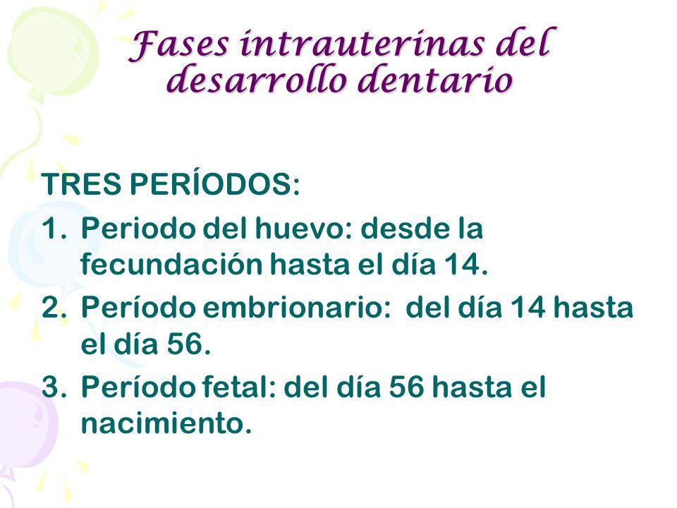 Fases intrauterinas del desarrollo dentario TRES PERÍODOS: 1.Periodo del huevo: desde la fecundación hasta el día 14. 2.Período embrionario: del día 1