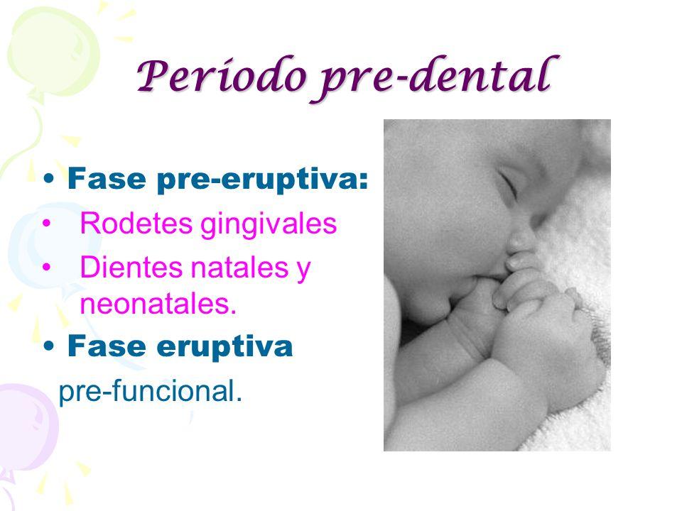 Período pre-dental Fase pre-eruptiva: Rodetes gingivales Dientes natales y neonatales. Fase eruptiva pre-funcional.