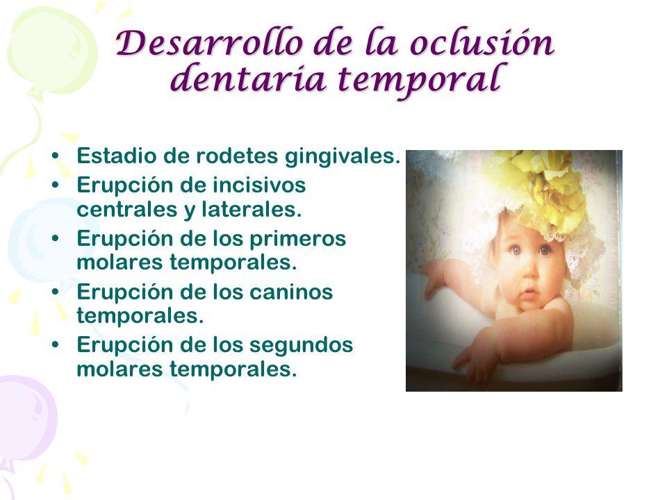 Desarrollo de la oclusión dentaria temporal Estadio de rodetes gingivales. Erupción de incisivos centrales y laterales. Erupción de los primeros molar