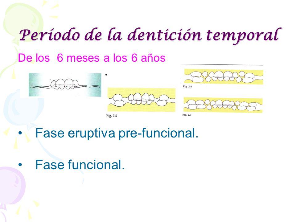 Período de la dentición temporal De los 6 meses a los 6 años Fase eruptiva pre-funcional. Fase funcional.