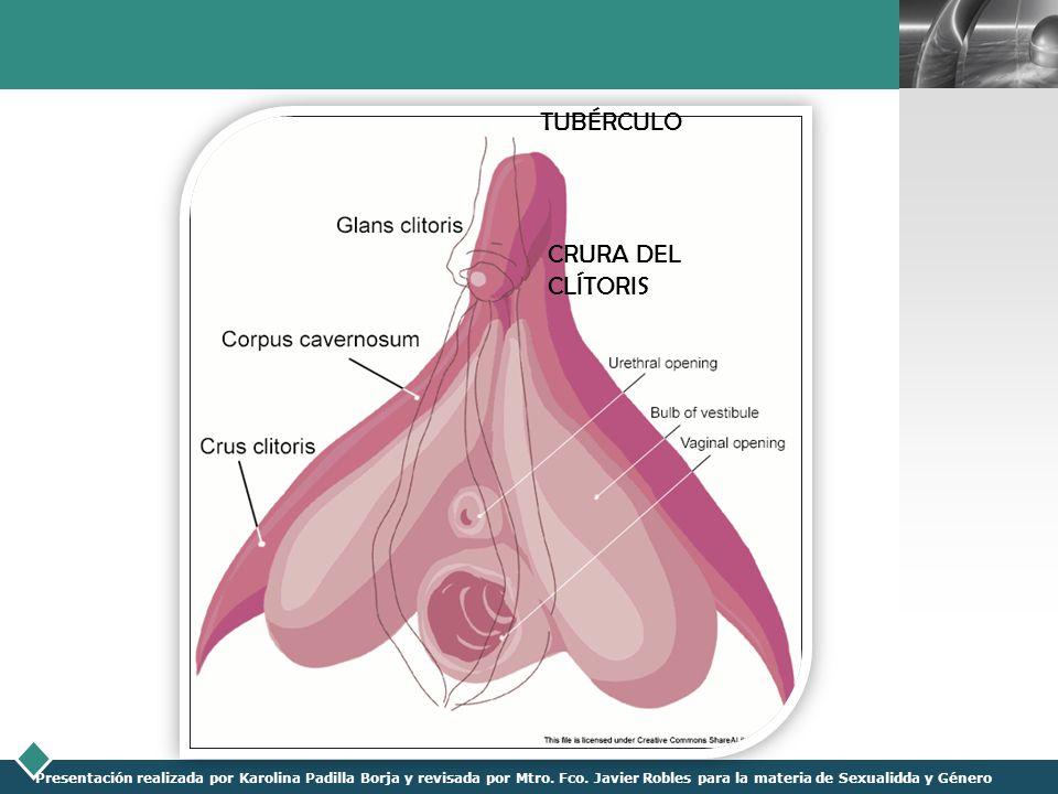 LOGO Presentación realizada por Karolina Padilla Borja y revisada por Mtro. Fco. Javier Robles para la materia de Sexualidda y Género TUBÉRCULO CRURA