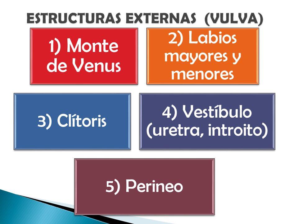 1) Monte de Venus 2) Labios mayores y menores 3) Clítoris 4) Vestíbulo (uretra, introito) 5) Perineo