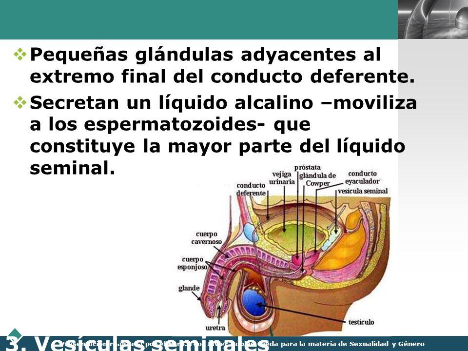 LOGO Presentación realizada por el Mtro. Fco. Javier Robles Ojeda para la materia de Sexualidad y Género 3. Vesículas seminales Pequeñas glándulas ady