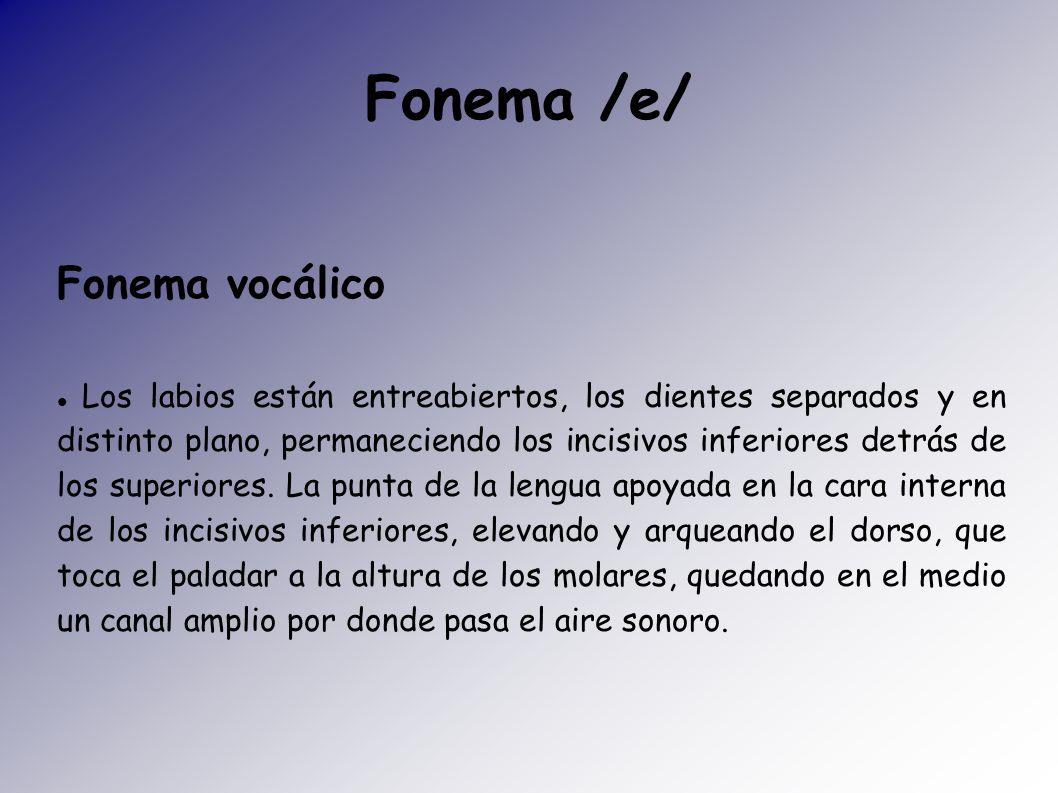 Fonema /e/ Fonema vocálico Los labios están entreabiertos, los dientes separados y en distinto plano, permaneciendo los incisivos inferiores detrás de