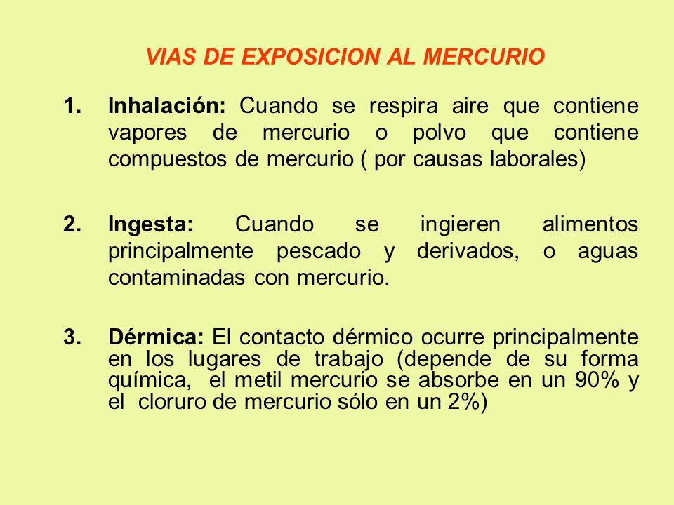 VIAS DE EXPOSICION AL MERCURIO 1.Inhalación: Cuando se respira aire que contiene vapores de mercurio o polvo que contiene compuestos de mercurio ( por