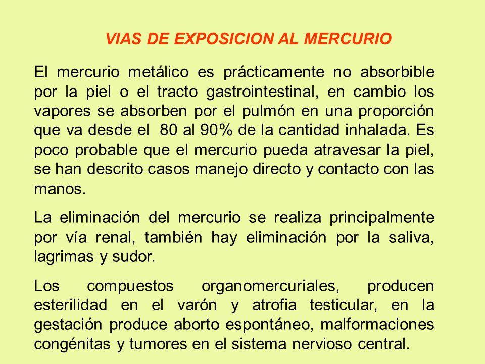 VIAS DE EXPOSICION AL MERCURIO El mercurio metálico es prácticamente no absorbible por la piel o el tracto gastrointestinal, en cambio los vapores se