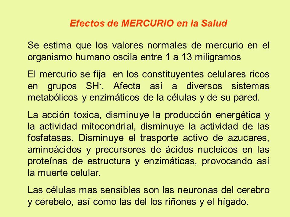 Efectos de MERCURIO en la Salud Se estima que los valores normales de mercurio en el organismo humano oscila entre 1 a 13 miligramos El mercurio se fi