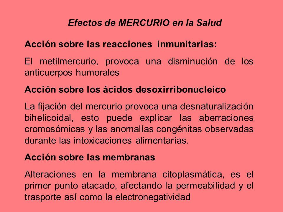 Efectos de MERCURIO en la Salud Acción sobre las reacciones inmunitarias: El metilmercurio, provoca una disminución de los anticuerpos humorales Acció