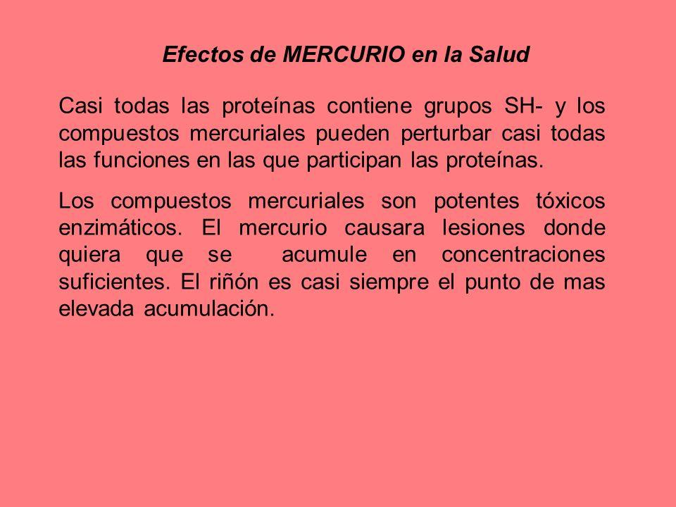 Efectos de MERCURIO en la Salud Casi todas las proteínas contiene grupos SH- y los compuestos mercuriales pueden perturbar casi todas las funciones en