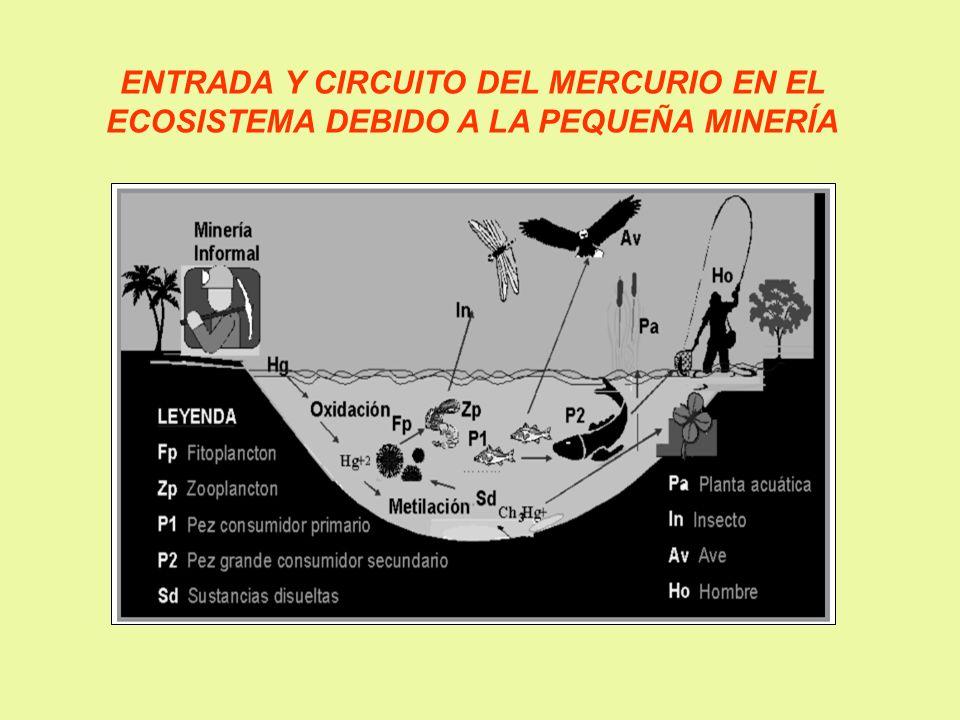 ENTRADA Y CIRCUITO DEL MERCURIO EN EL ECOSISTEMA DEBIDO A LA PEQUEÑA MINERÍA