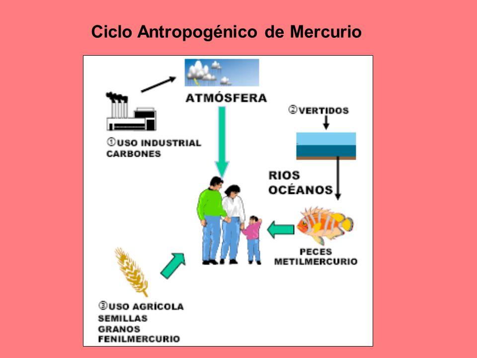 Ciclo Antropogénico de Mercurio