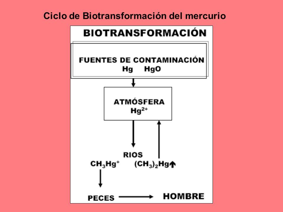 Ciclo de Biotransformación del mercurio
