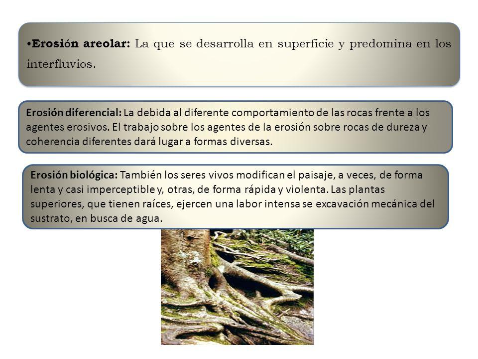 Erosi ó n areolar: La que se desarrolla en superficie y predomina en los interfluvios. Erosión diferencial: La debida al diferente comportamiento de l