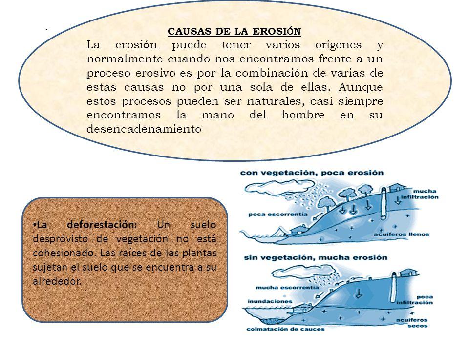 . La deforestación: Un suelo desprovisto de vegetación no está cohesionado. Las raíces de las plantas sujetan el suelo que se encuentra a su alrededor