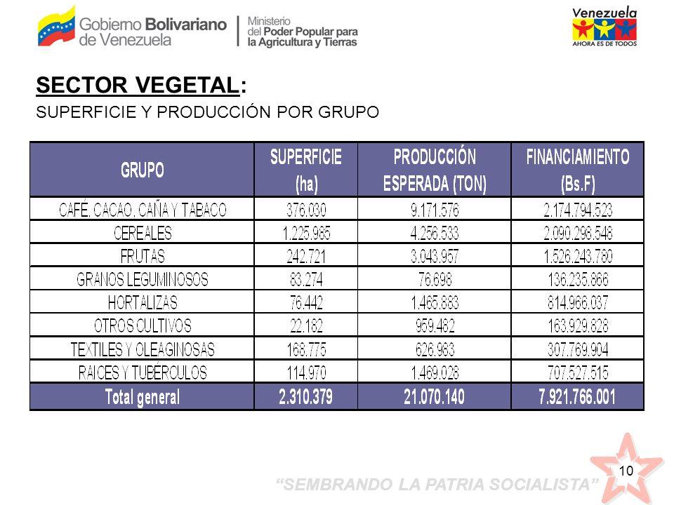 SEMBRANDO LA PATRIA SOCIALISTA 10 SECTOR VEGETAL: SUPERFICIE Y PRODUCCIÓN POR GRUPO