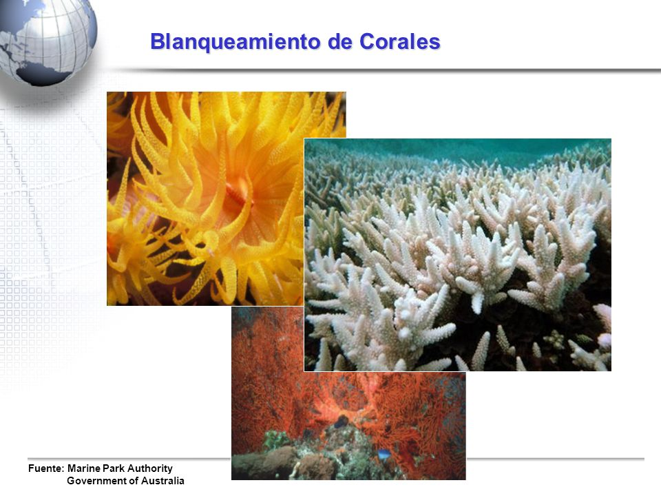 Fuente: Marine Park Authority Government of Australia Blanqueamiento de Corales