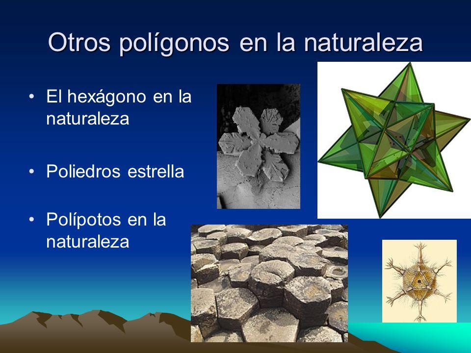Otros polígonos en la naturaleza El hexágono en la naturaleza Poliedros estrella Polípotos en la naturaleza