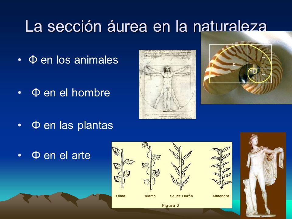 La sección áurea en la naturaleza Φ en los animales Φ en el hombre Φ en las plantas Φ en el arte