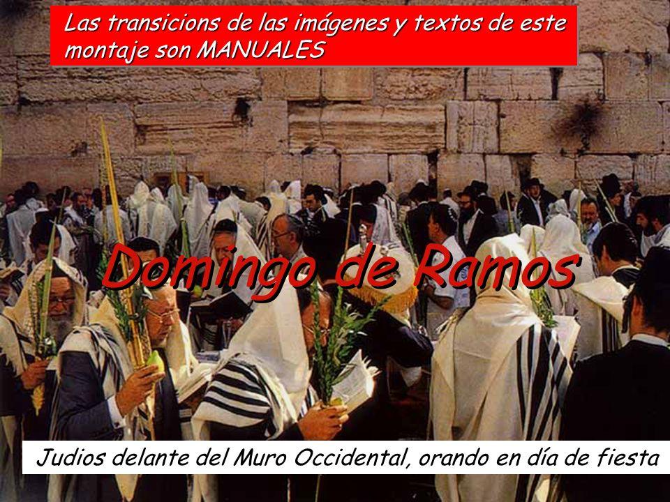 Domingo de Ramos Judios delante del Muro Occidental, orando en día de fiesta Las transicions de las imágenes y textos de este montaje son MANUALES mon