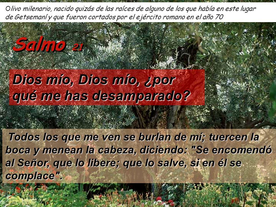 Por estos caminos pasó Jesús prisionero, de camino hacia la casa de Anás Dios mío, Dios mío, ¿por qué me has desamparado.