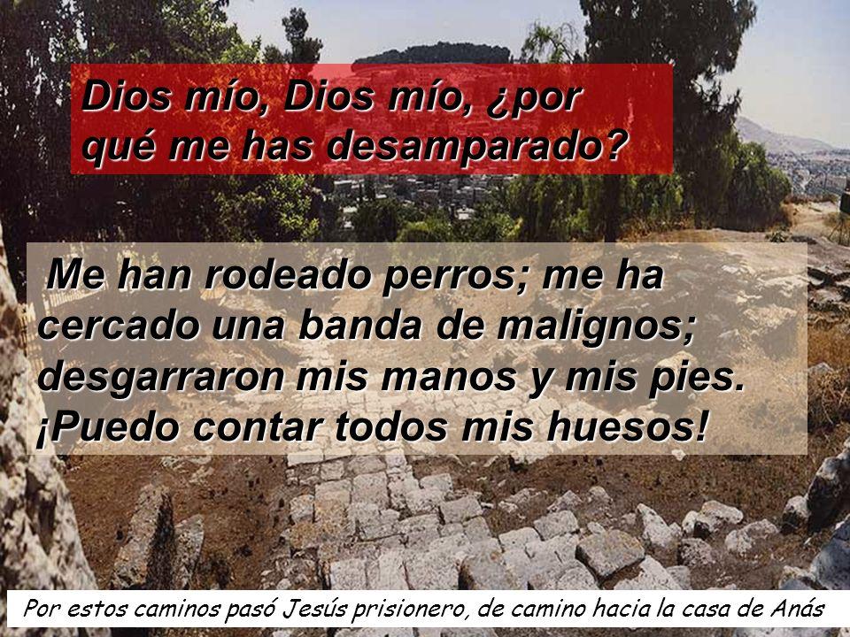 Por estos caminos pasó Jesús prisionero, de camino hacia la casa de Anás Dios mío, Dios mío, ¿por qué me has desamparado? Me han rodeado perros; me ha