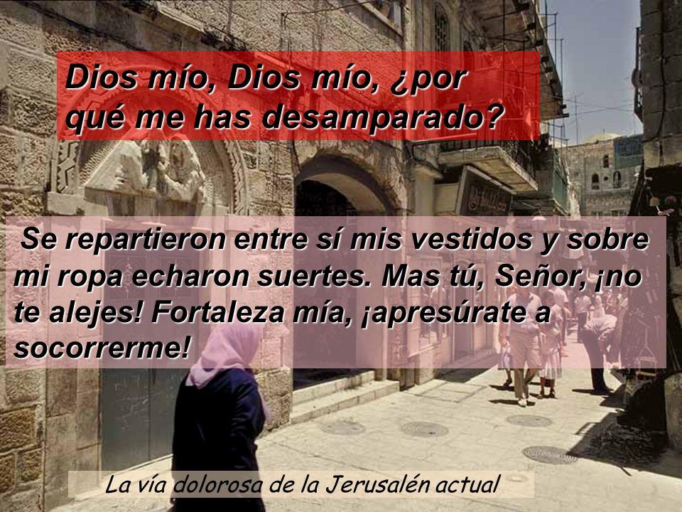 La vía dolorosa de la Jerusalén actual Dios mío, Dios mío, ¿por qué me has desamparado? Se repartieron entre sí mis vestidos y sobre mi ropa echaron s