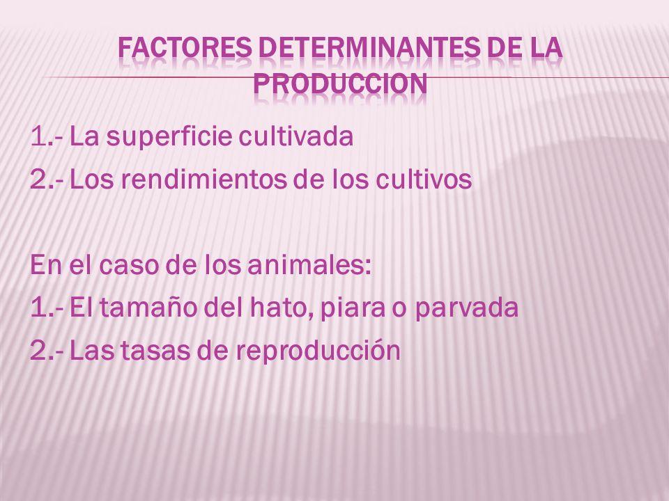 1.- La superficie cultivada 2.- Los rendimientos de los cultivos En el caso de los animales: 1.- El tamaño del hato, piara o parvada 2.- Las tasas de reproducción