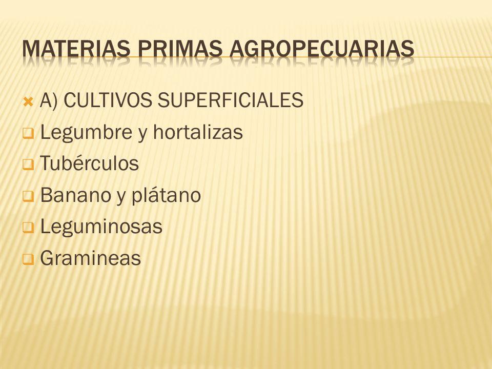 A) CULTIVOS SUPERFICIALES Legumbre y hortalizas Tubérculos Banano y plátano Leguminosas Gramineas