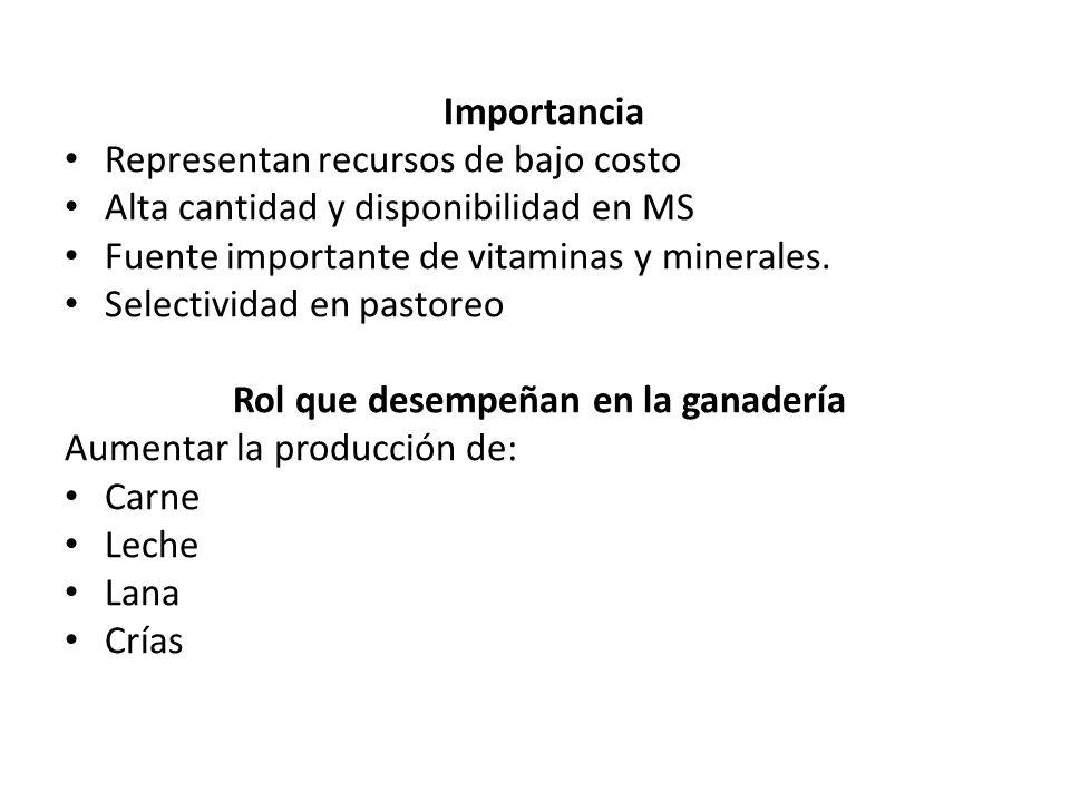 Importancia Representan recursos de bajo costo Alta cantidad y disponibilidad en MS Fuente importante de vitaminas y minerales. Selectividad en pastor