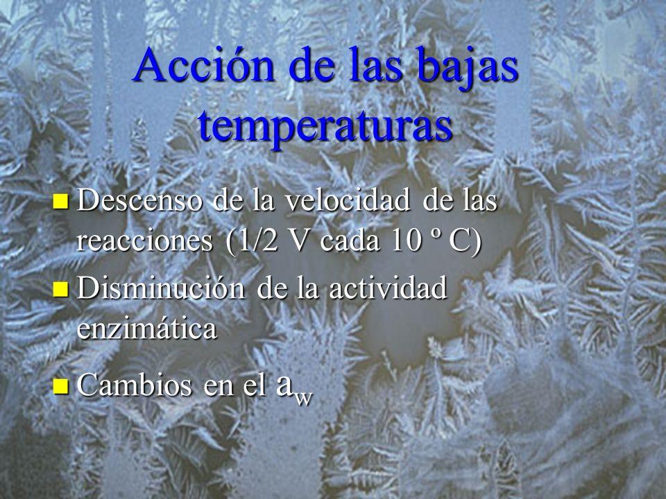 Acción de las bajas temperaturas Descenso de la velocidad de las reacciones (1 2 V cada 10 º C) Descenso de la velocidad de las reacciones (1 2 V cada