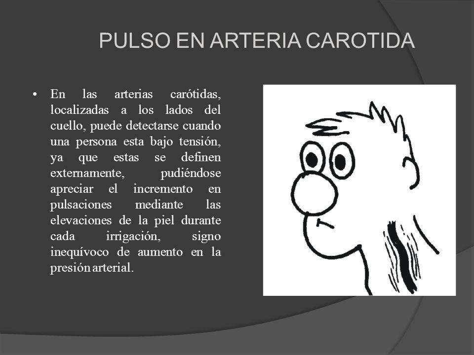 PULSO EN ARTERIA CAROTIDA En las arterias carótidas, localizadas a los lados del cuello, puede detectarse cuando una persona esta bajo tensión, ya que