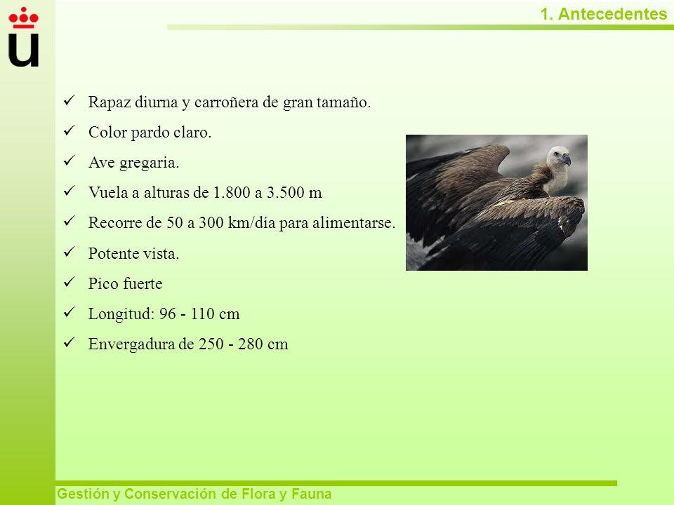 1. Antecedentes Gestión y Conservación de Flora y Fauna 1. Antecedentes Gestión y Conservación de Flora y Fauna Rapaz diurna y carroñera de gran tamañ