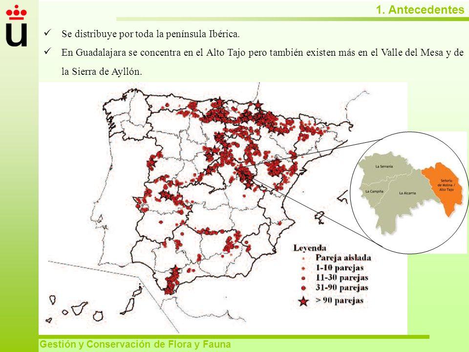 1. Antecedentes Gestión y Conservación de Flora y Fauna Se distribuye por toda la península Ibérica. En Guadalajara se concentra en el Alto Tajo pero