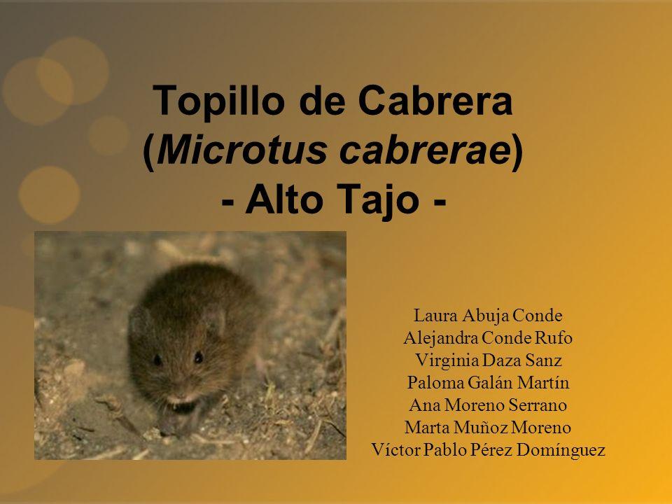 Topillo de Cabrera (Microtus cabrerae) - Alto Tajo - Laura Abuja Conde Alejandra Conde Rufo Virginia Daza Sanz Paloma Galán Martín Ana Moreno Serrano