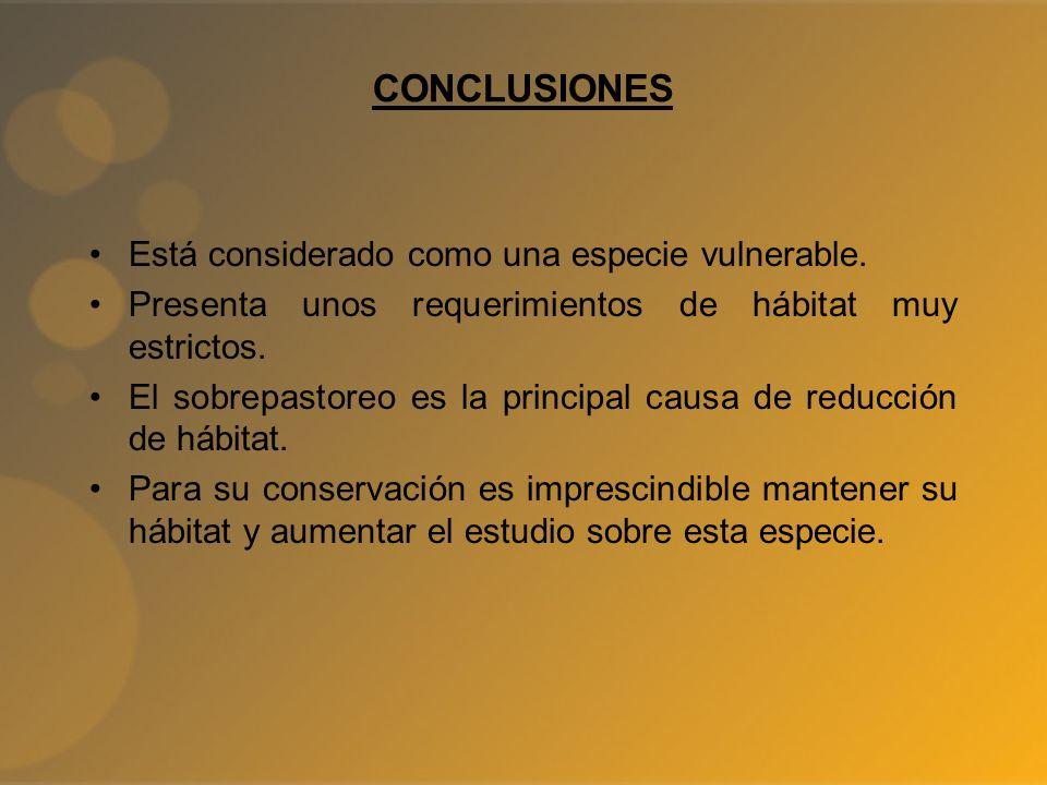 CONCLUSIONES Está considerado como una especie vulnerable. Presenta unos requerimientos de hábitat muy estrictos. El sobrepastoreo es la principal cau