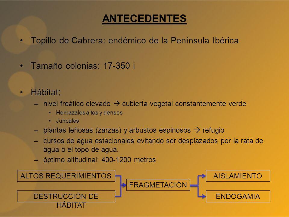 ANTECEDENTES Topillo de Cabrera: endémico de la Península Ibérica Tamaño colonias: 17-350 i Hábitat : –nivel freático elevado cubierta vegetal constan