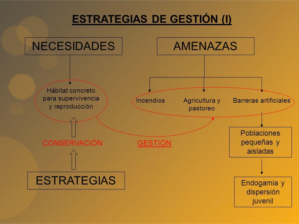 ESTRATEGIAS DE GESTIÓN (I) NECESIDADES Hábitat concreto para supervivencia y reproducción AMENAZAS Poblaciones pequeñas y aisladas Endogamia y dispers