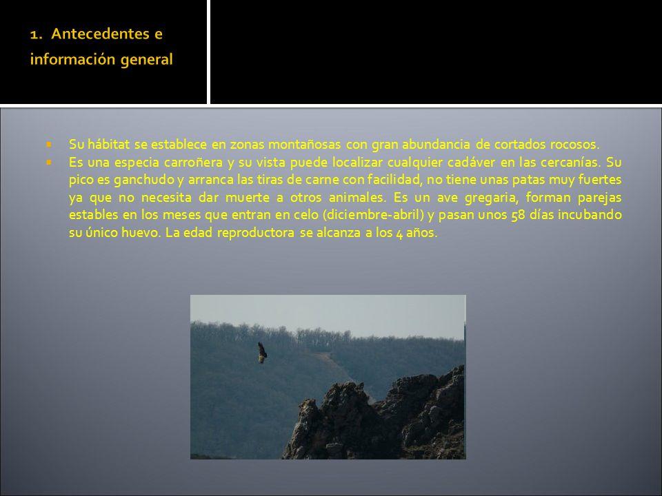Su hábitat se establece en zonas montañosas con gran abundancia de cortados rocosos. Es una especia carroñera y su vista puede localizar cualquier cad
