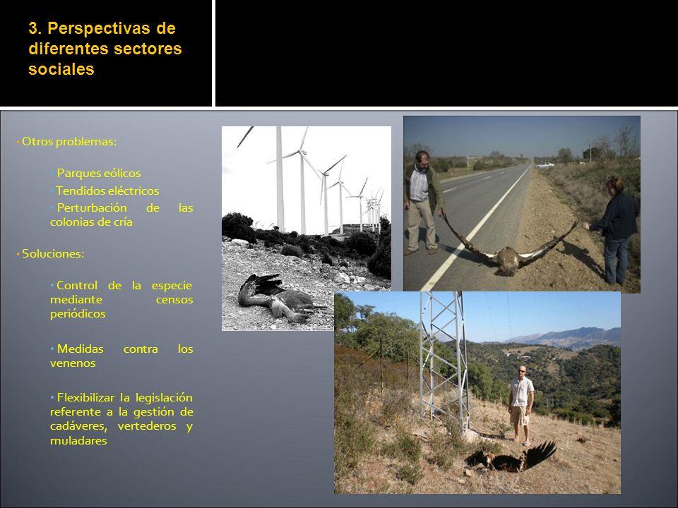 Otros problemas: Parques eólicos Tendidos eléctricos Perturbación de las colonias de cría Soluciones: Control de la especie mediante censos periódicos