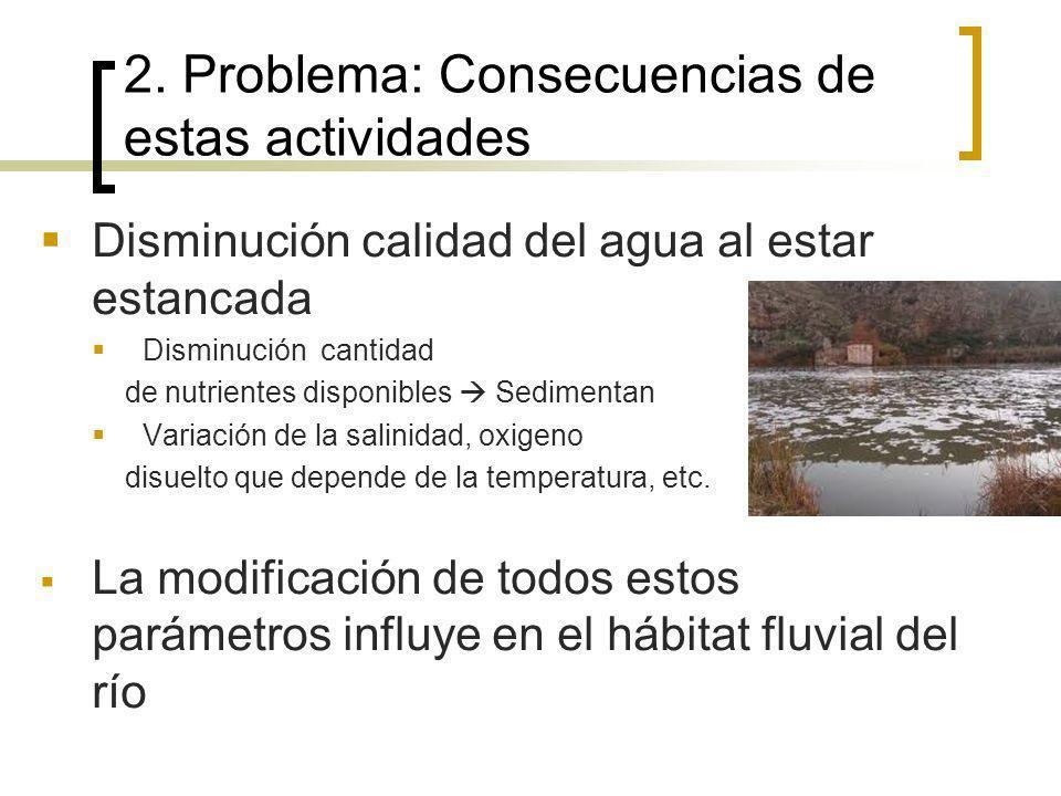 Disminución calidad del agua al estar estancada Disminución cantidad de nutrientes disponibles Sedimentan Variación de la salinidad, oxigeno disuelto