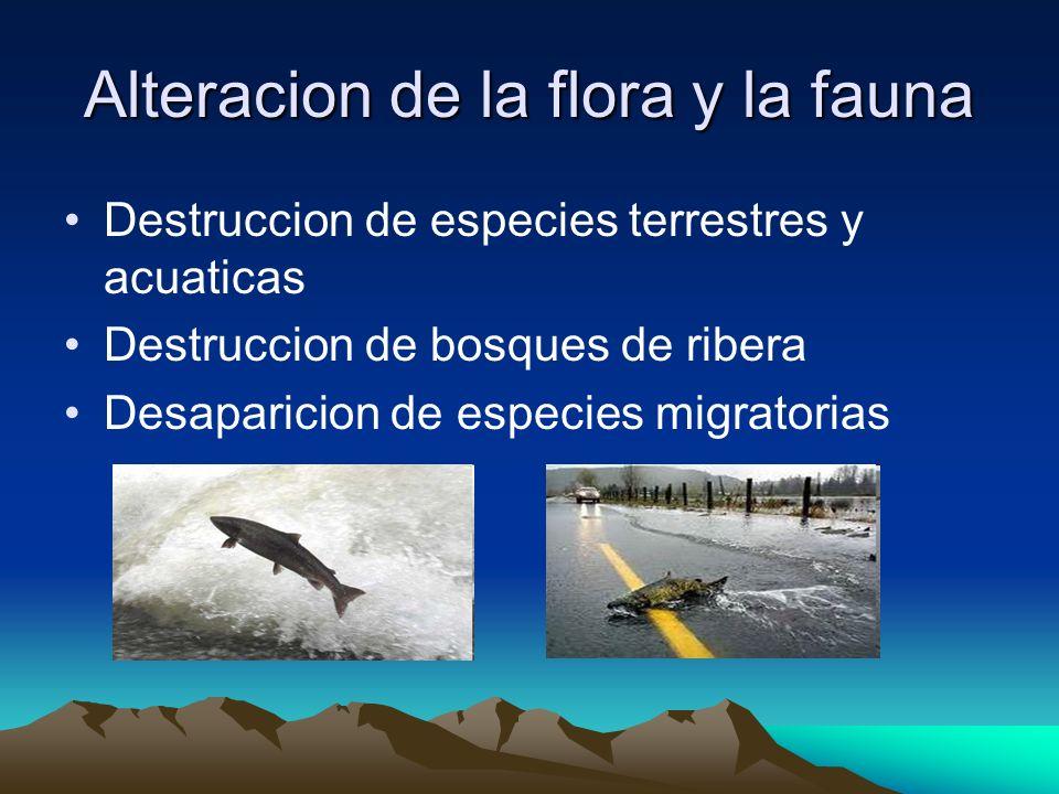 Alteracion de la flora y la fauna Destruccion de especies terrestres y acuaticas Destruccion de bosques de ribera Desaparicion de especies migratorias