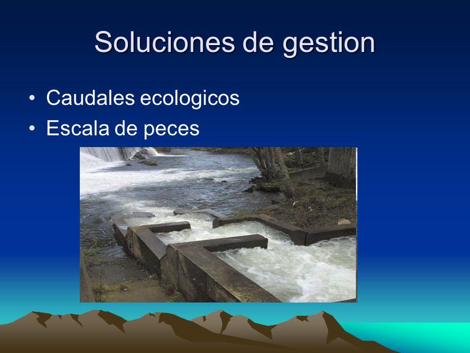 Soluciones de gestion Caudales ecologicos Escala de peces