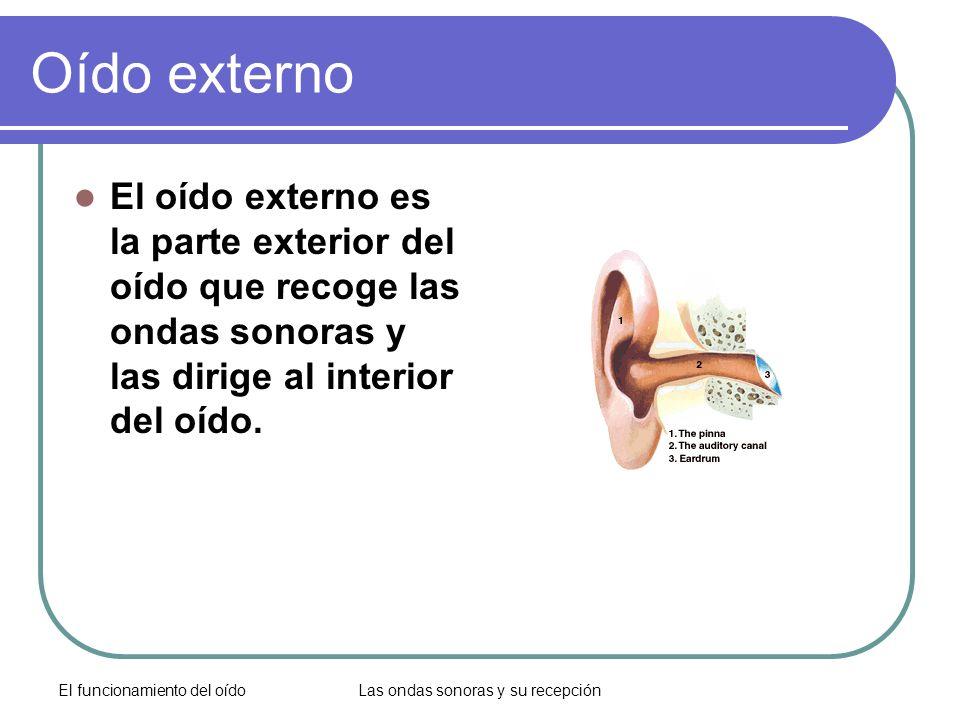 El funcionamiento del oídoLas ondas sonoras y su recepción Oído externo El oído externo es la parte exterior del oído que recoge las ondas sonoras y l